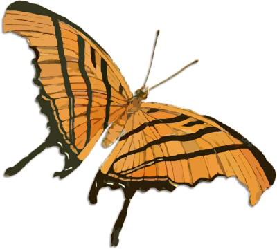 butterfly-1204615_960_720-Copy-2.png