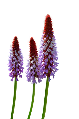 wild-flowers-2372548_1920.png